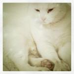 kitty! (oliver)