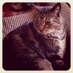 kitty! (frank)